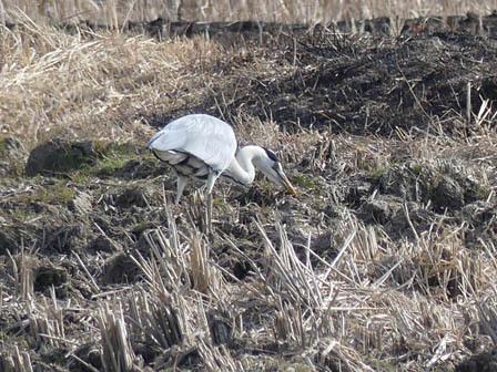 里山の鳥の観察_a0123836_17333250.jpg