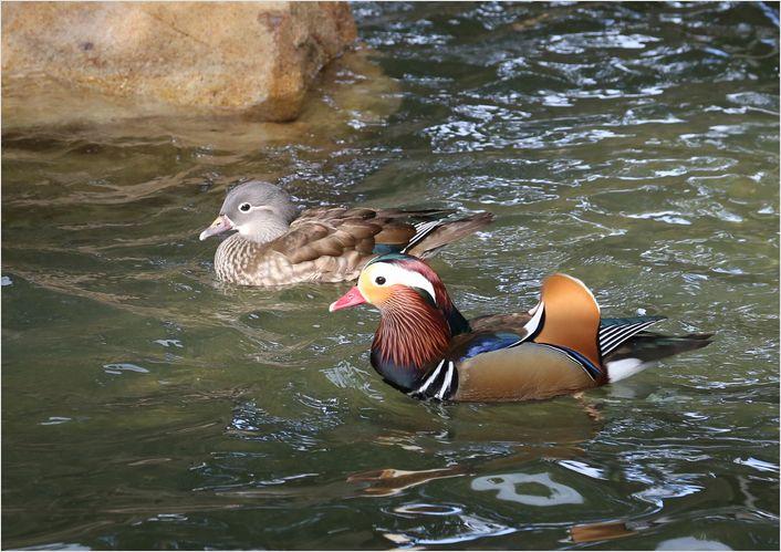 冬の動物園 ②_a0256349_10415572.jpg