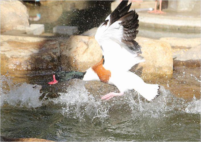 冬の動物園 ②_a0256349_10421482.jpg