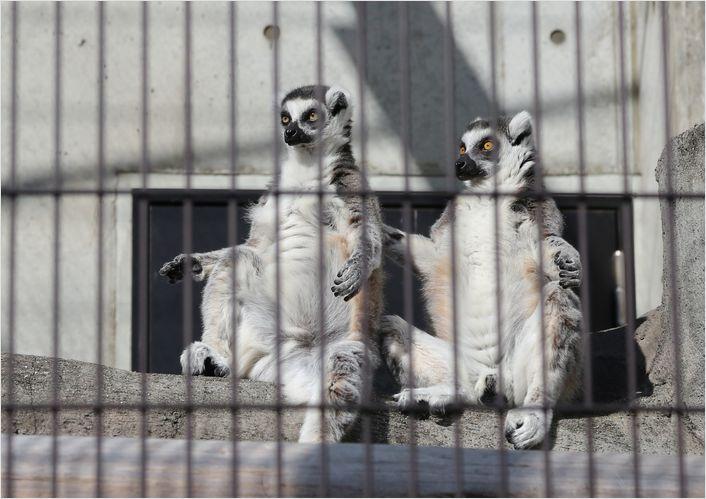 冬の動物園 ②_a0256349_10422190.jpg