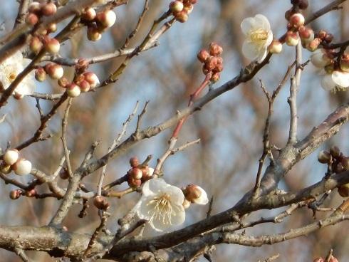 春待つ花々_e0175370_21502457.jpg