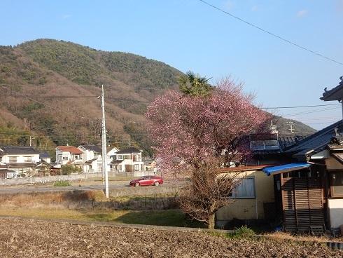 春待つ花々_e0175370_21503589.jpg