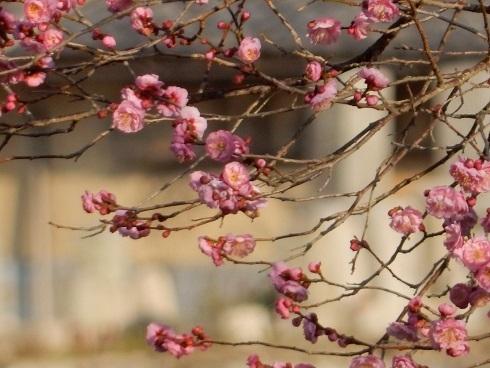 春待つ花々_e0175370_21504689.jpg