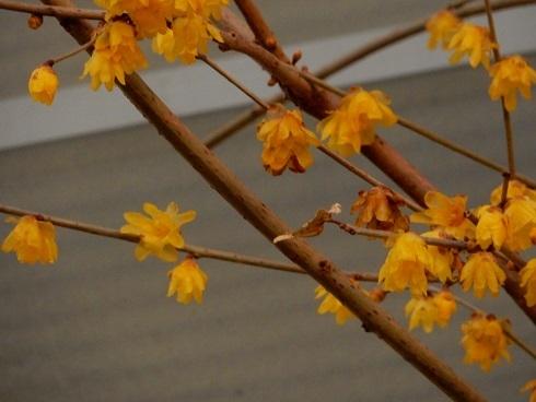 春待つ花々_e0175370_21514108.jpg