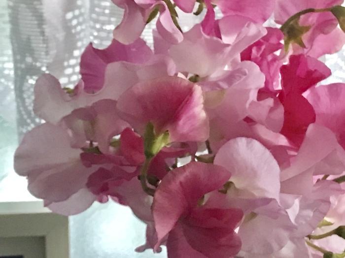 春の先取り_f0047623_12203616.jpeg