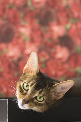 [猫的]世界中の紙_e0090124_23584323.jpg