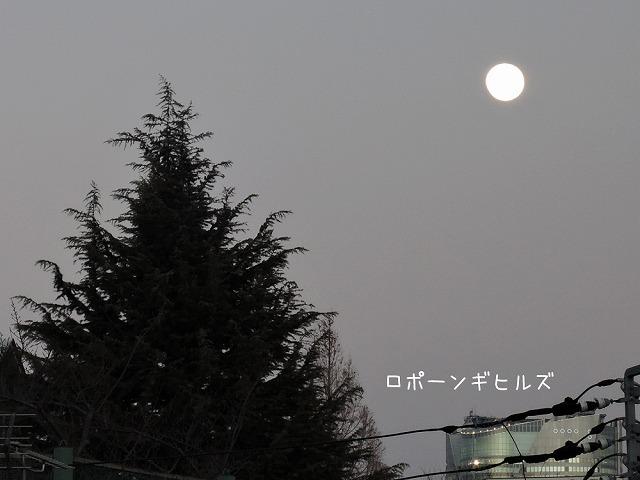 プレ・スーパームーン_c0062832_15594497.jpg