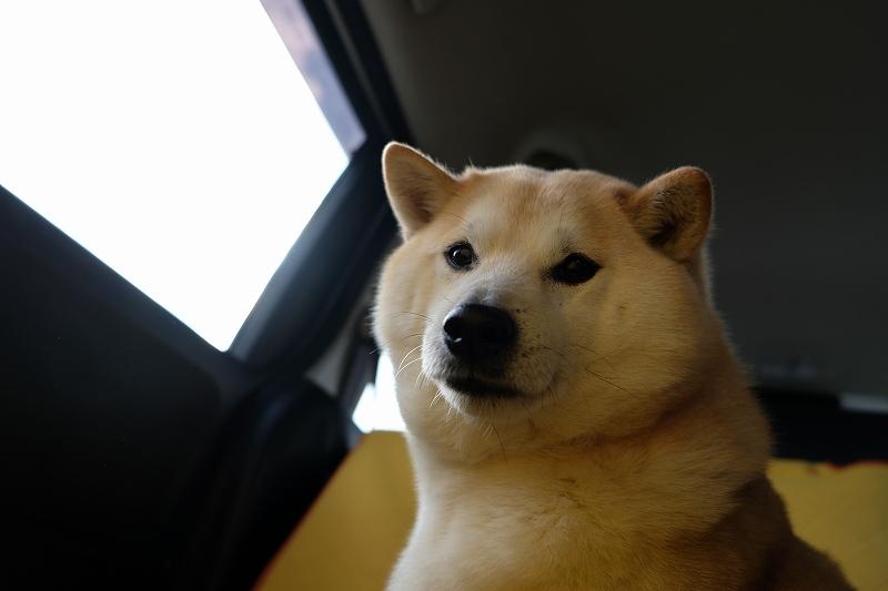 犬といっしょに海を見に行く_e0374932_06535040.jpg