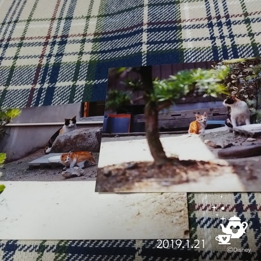 f0262033_06130551.jpg