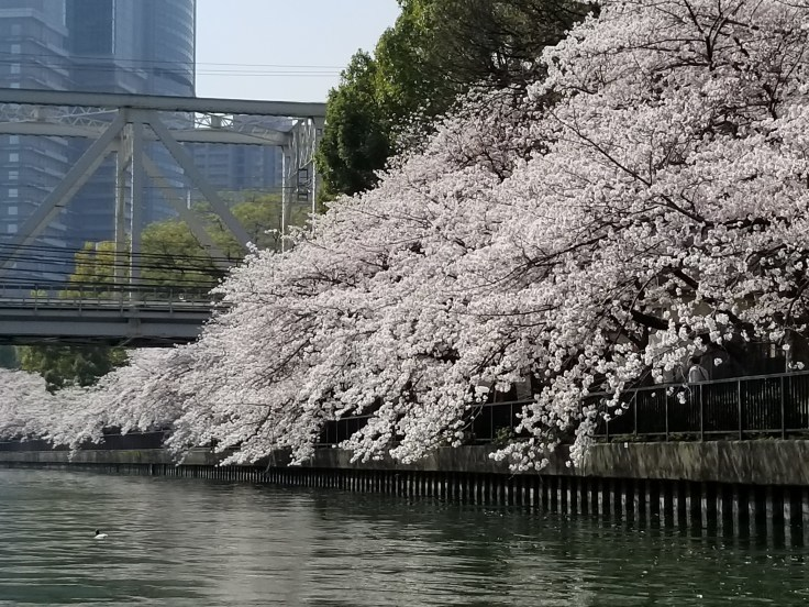 OFUNE CAMOME [Cherryblossom viewing on Tiny boat]_a0137142_01195828.jpg