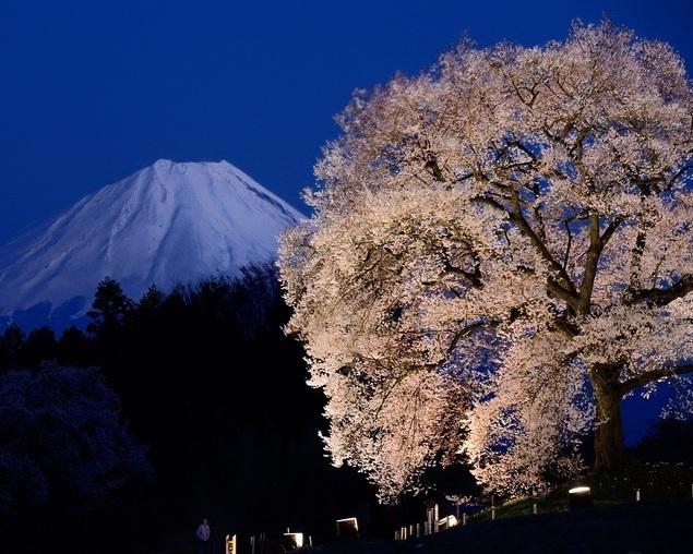2019年ホテル内藤提供:オプションツアーの御紹介~今回は夜桜めぐりです。_b0151362_10481061.jpg