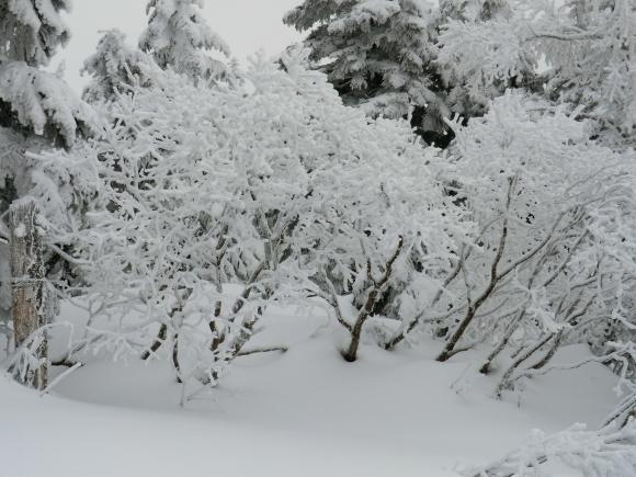 蔵王、雪景色_d0193569_08304581.jpg