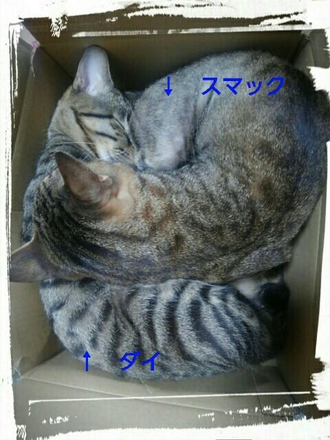 『vol.3700 小さな箱に・・・2匹』_e0040714_23480190.jpg