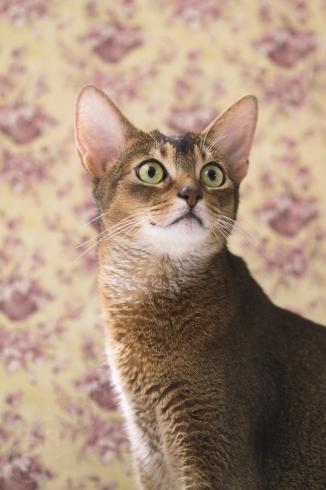 [猫的]紙の温度_e0090124_22482076.jpg