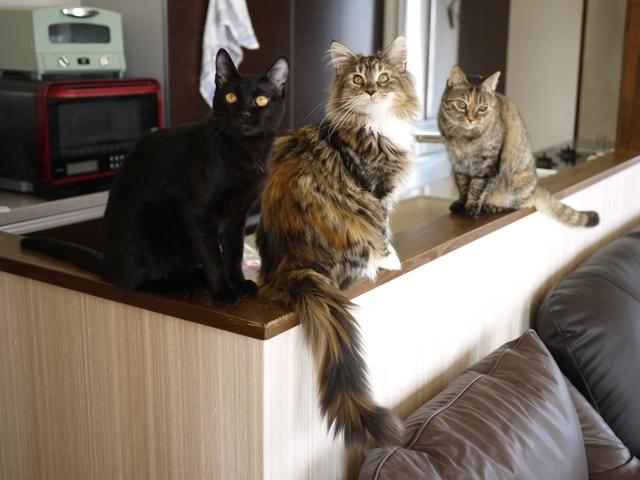 猫のお留守番 天ちゃん麦くん茶くん〇くんAoiちゃん編。_a0143140_19264758.jpg