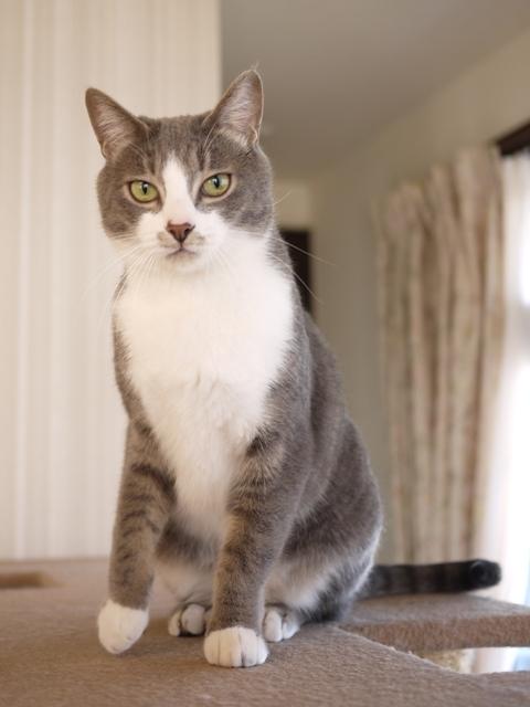 猫のお留守番 天ちゃん麦くん茶くん〇くんAoiちゃん編。_a0143140_19275750.jpg