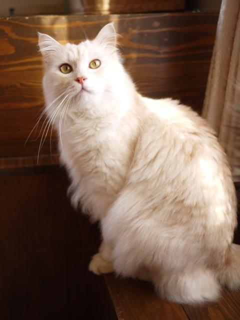 猫のお留守番 天ちゃん麦くん茶くん〇くんAoiちゃん編。_a0143140_19282392.jpg