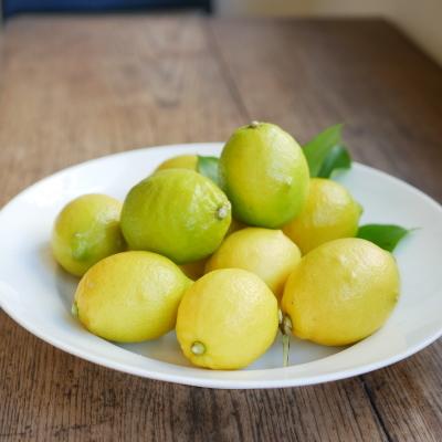 Citron et Citron レモンのドーナツ勢ぞろい!_a0221457_16163043.jpg