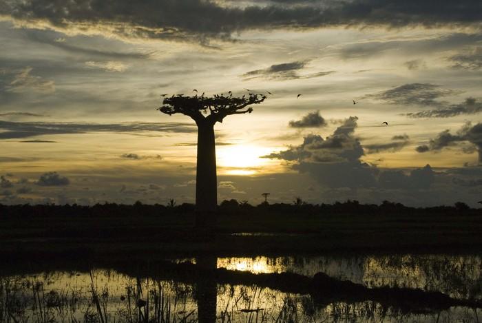 2019年のマダガスカル・レポートを見て_f0103459_171295.jpg