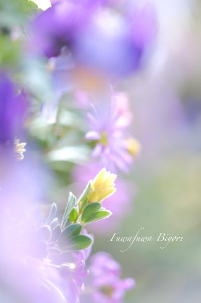 春よ来い **_d0344864_21100609.jpg