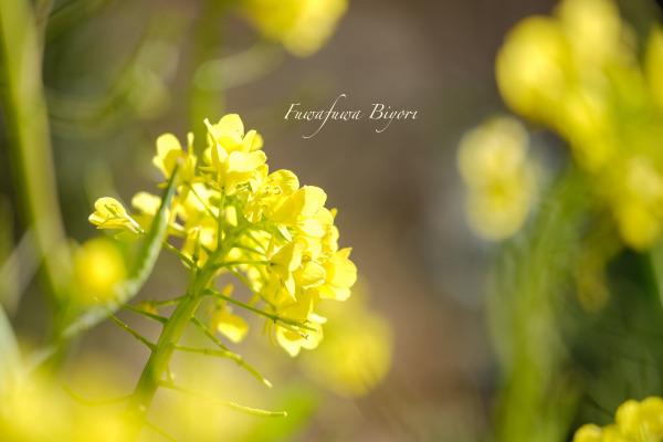 春よ来い **_d0344864_21101667.jpg