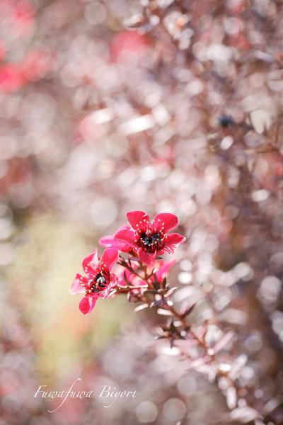 春よ来い **_d0344864_21102107.jpg