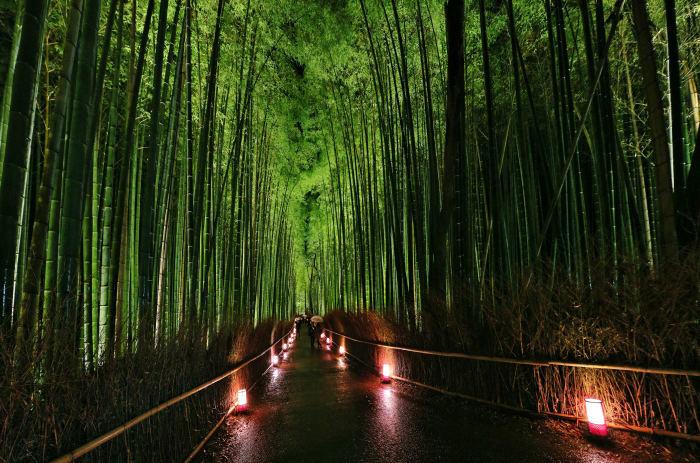 嵐山花灯路 2018_f0021869_14390988.jpg