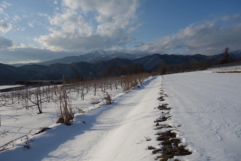 冬の散歩_e0112417_23162149.jpg