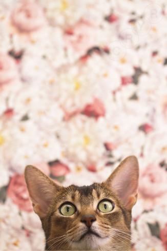 [猫的]和と洋_e0090124_22455214.jpg