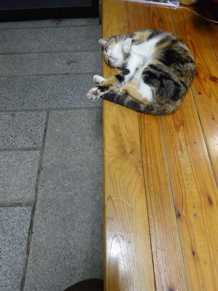 ネコと戯れる_c0111229_19114255.jpg