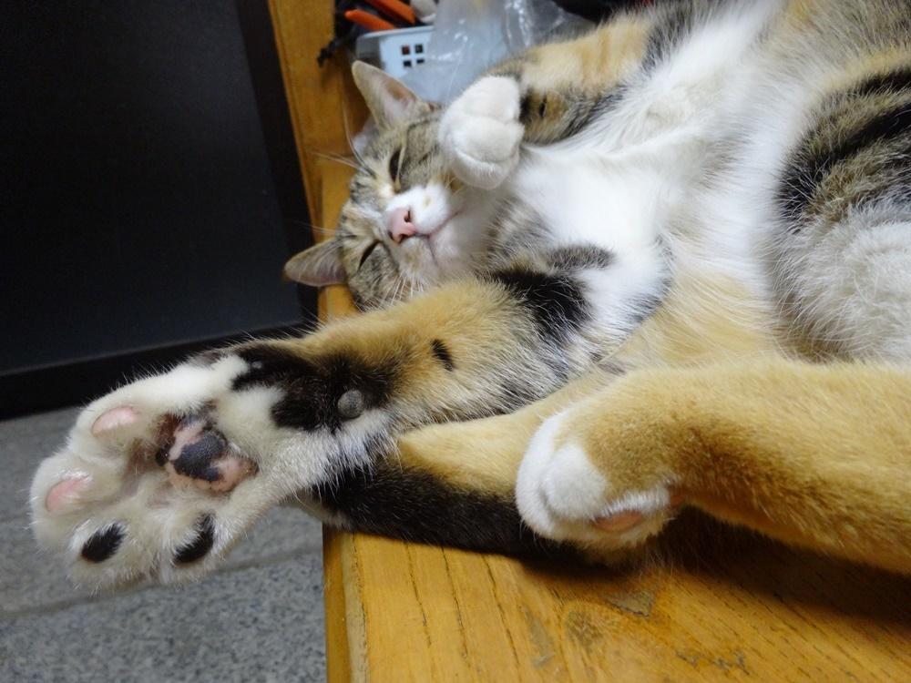 ネコと戯れる_c0111229_19115190.jpg