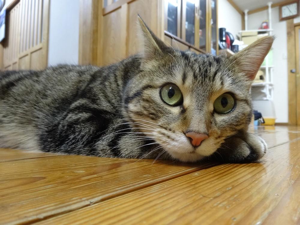 ネコと戯れる_c0111229_19121413.jpg