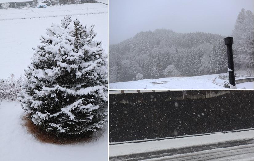 雪が_a0212730_07561342.jpg