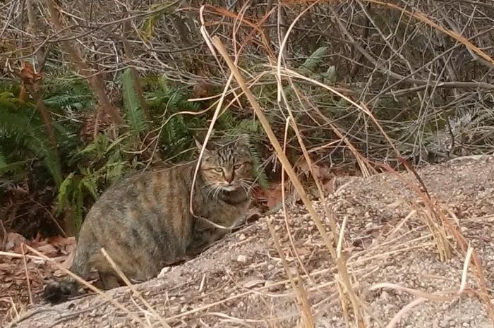 城山の猫さん、「さくら猫化計画」進行中_c0038434_17271564.jpg