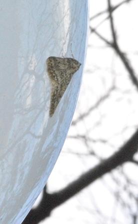 冬が好きな虫たち_a0123836_16311595.jpg