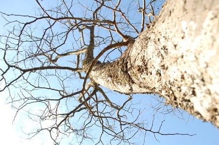 冬が好きな虫たち_a0123836_16320742.jpg