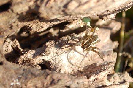 冬が好きな虫たち_a0123836_16350194.jpg