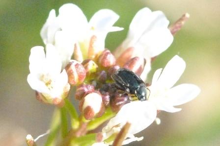 冬が好きな虫たち_a0123836_16381024.jpg