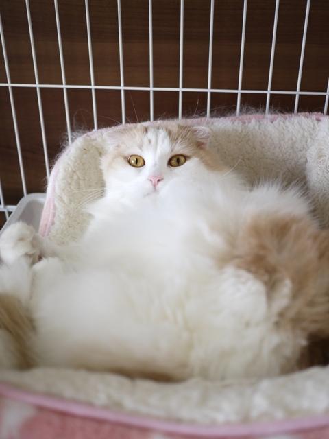 猫のお留守番 空くん編。_a0143140_21453207.jpg
