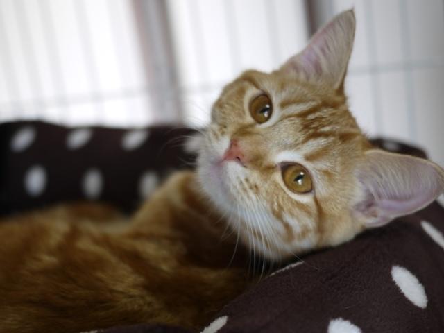 猫のお留守番 天ちゃん編。_a0143140_21485047.jpg