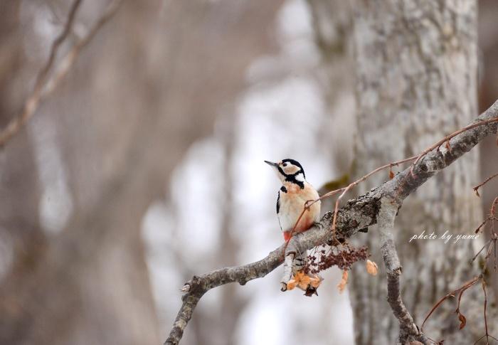 久々の野鳥撮り♪_a0322950_17521456.jpg