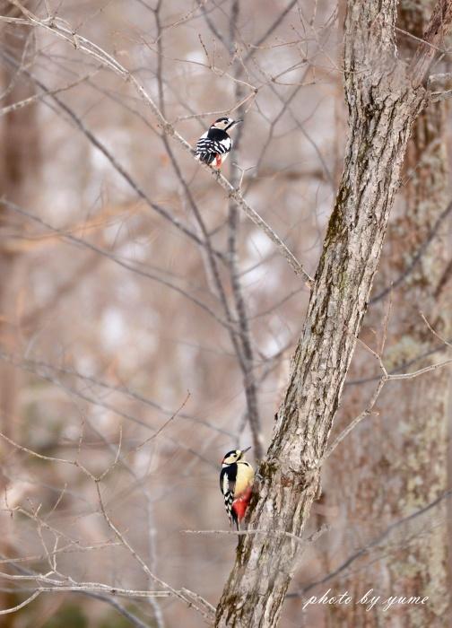 久々の野鳥撮り♪_a0322950_17525368.jpg