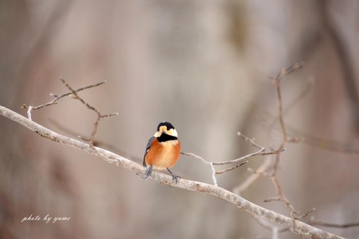 久々の野鳥撮り♪_a0322950_17540844.jpg