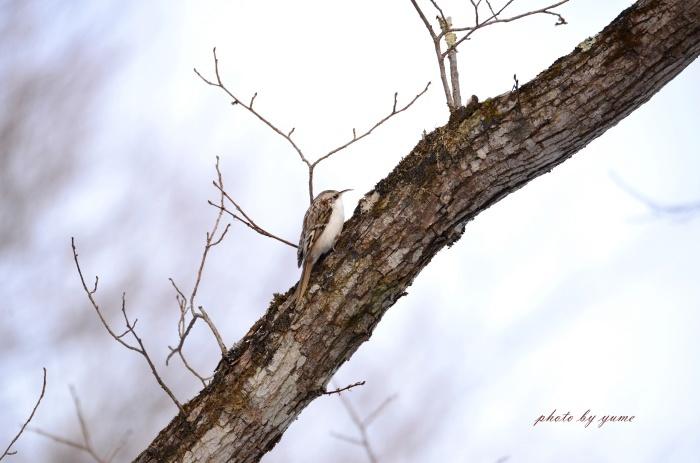 久々の野鳥撮り♪_a0322950_17544428.jpg