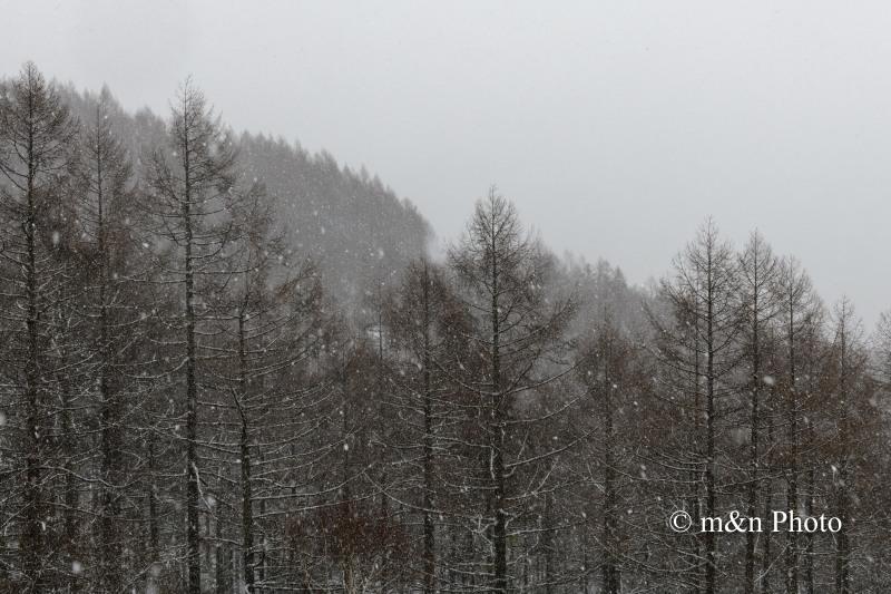 雪の高原へ_e0321360_00080491.jpg