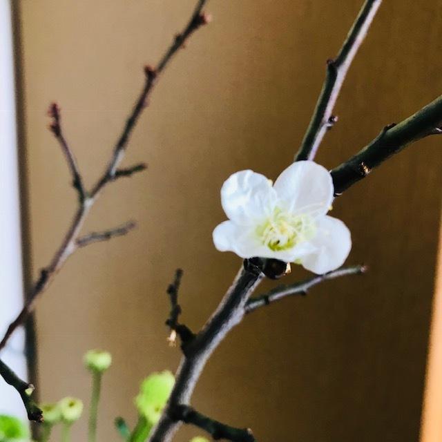 梅が咲いた_f0204295_09590372.jpg