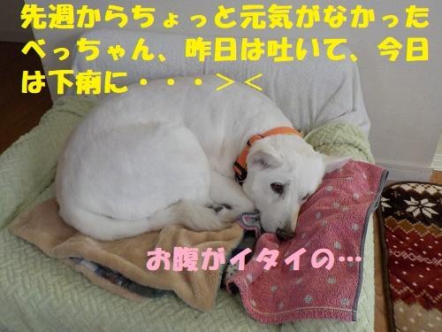 f0121712_00153521.jpg