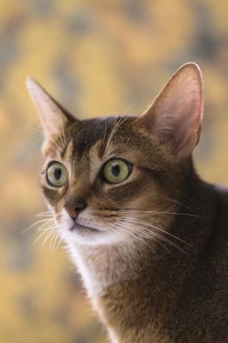 [猫的]花柄_e0090124_23561609.jpg