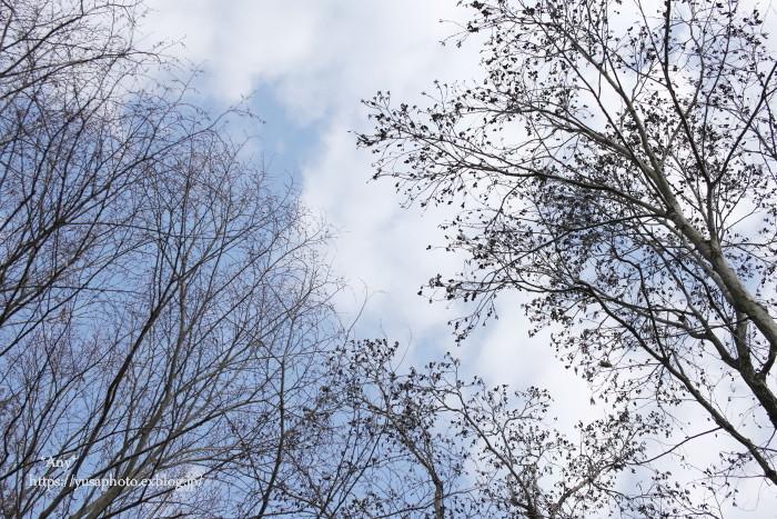 冬空_e0347431_17095156.jpg