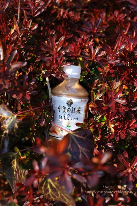 milk tea_e0347431_22515459.jpg